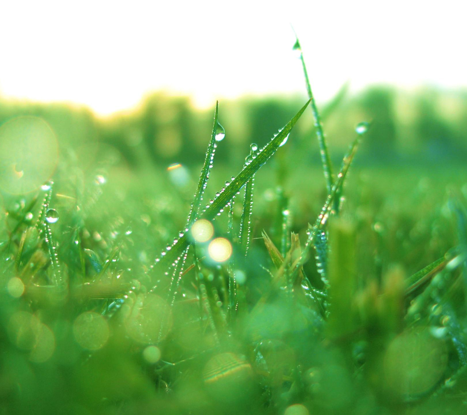 "photo ""dew drops on grass (windows nature wallpaper)"" in the album"