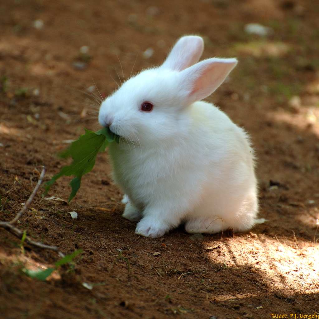 photo cute tiny baby bunny rabbit noms green leaf in the album