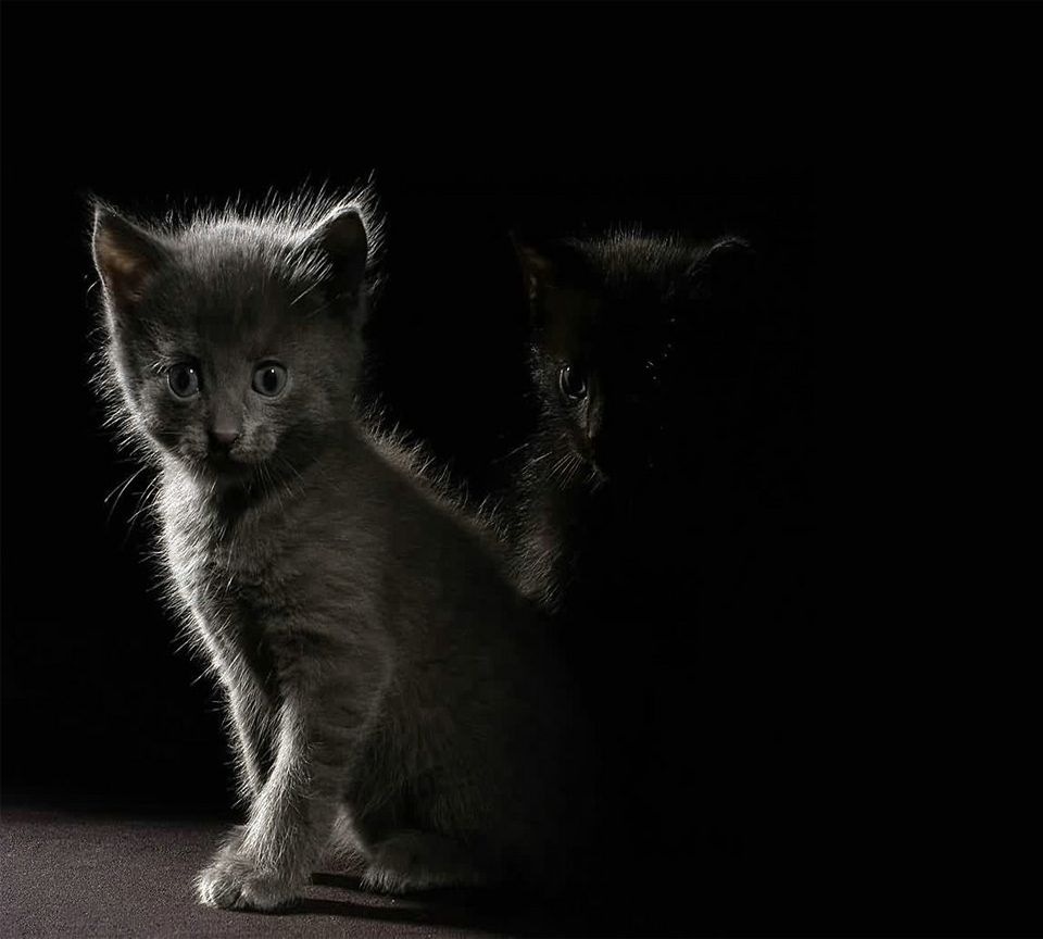Cats against black background