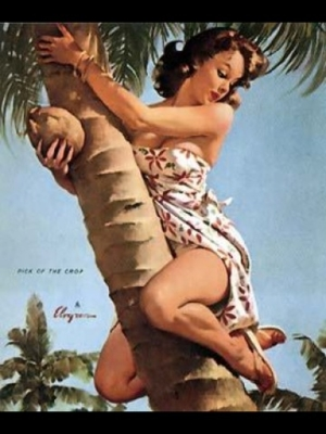 coconut pin up wallpaper