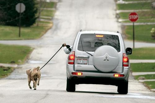 dogcar.png